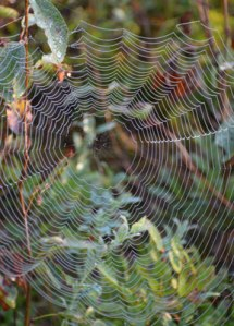 real-spider-web
